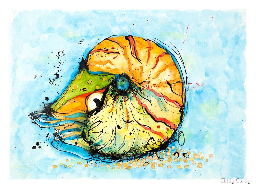 Miss Nautilus Shell by Cindy Curby