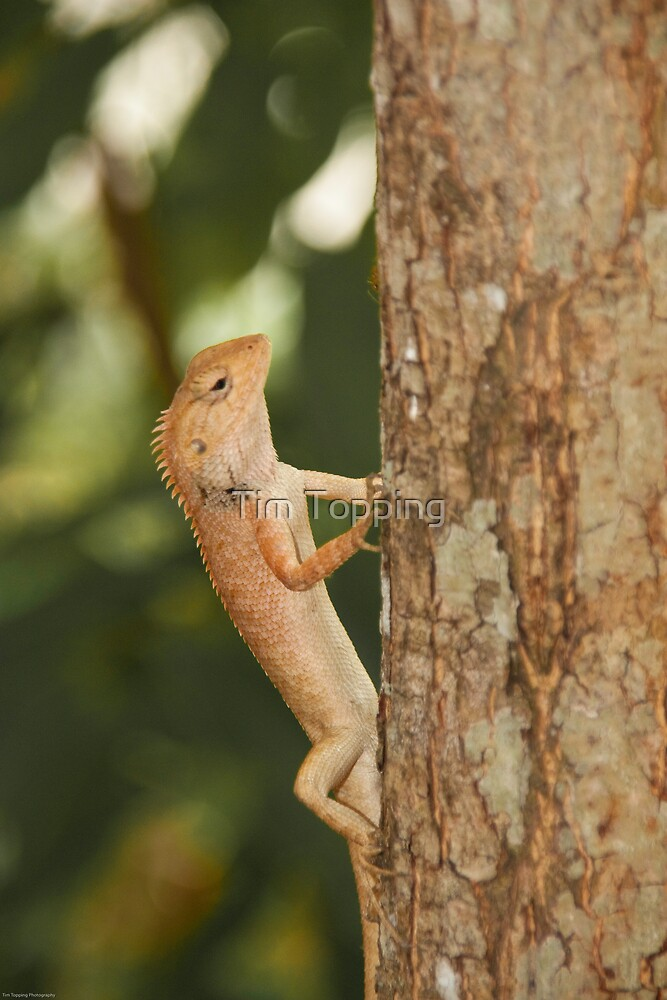Vietnam lizard by Tim Topping