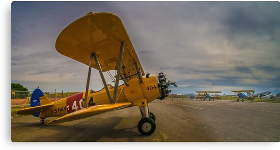Check Flight by Steve Walser