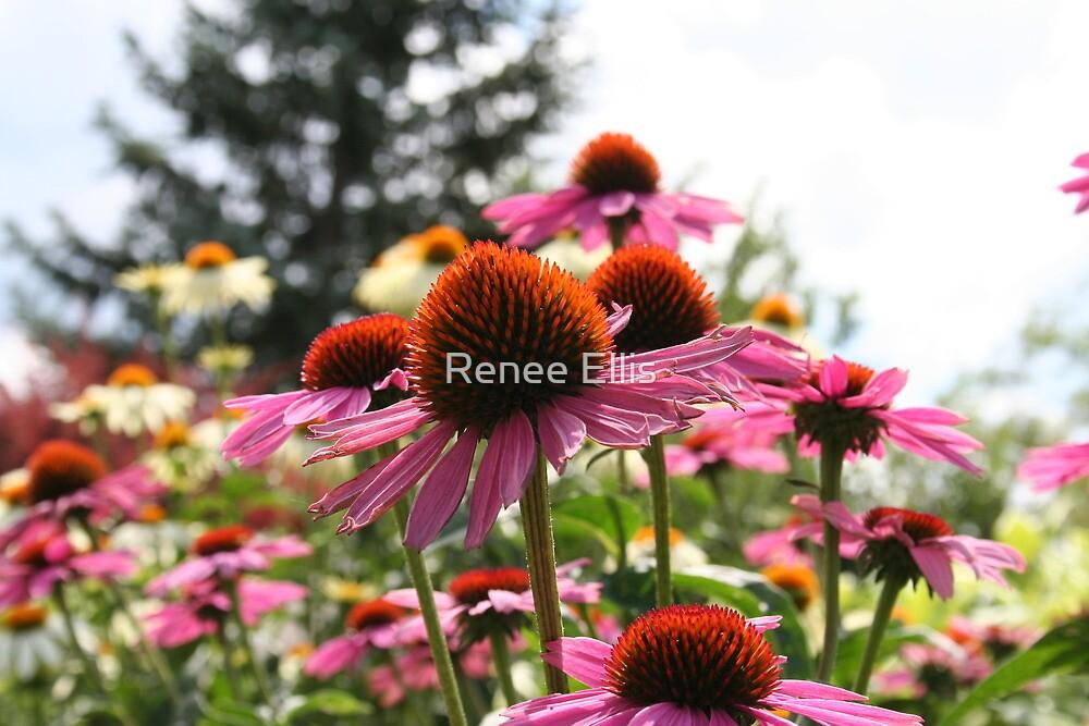 Summer Fields by Renee Ellis