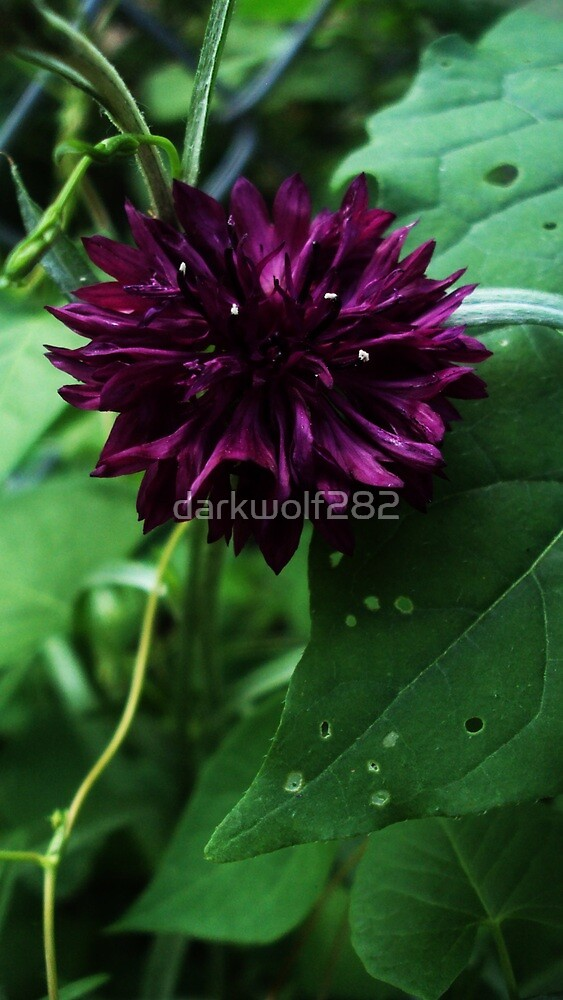 Dark Purple by darkwolf282