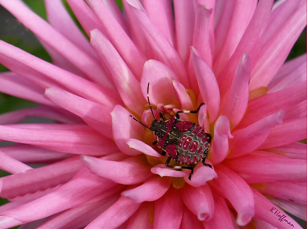 Bug Hiding by Kenneth Hoffman