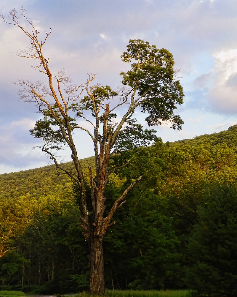 Tree of Joy by PineSinger