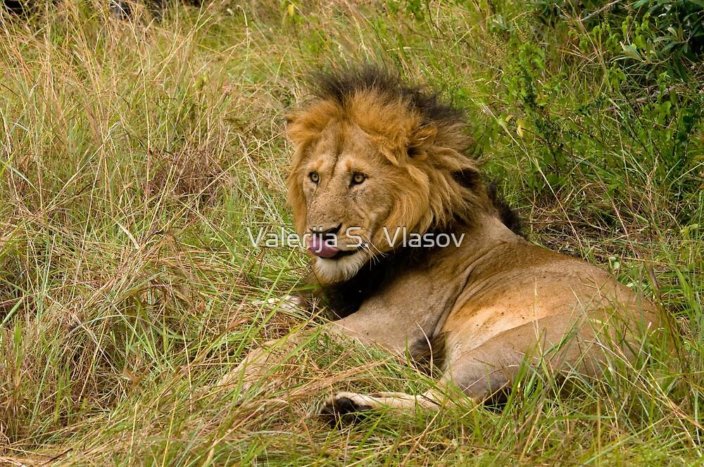 Pittoresque Male Lion  by Valerija S.  Vlasov