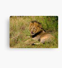 Pittoresque Male Lion  Canvas Print