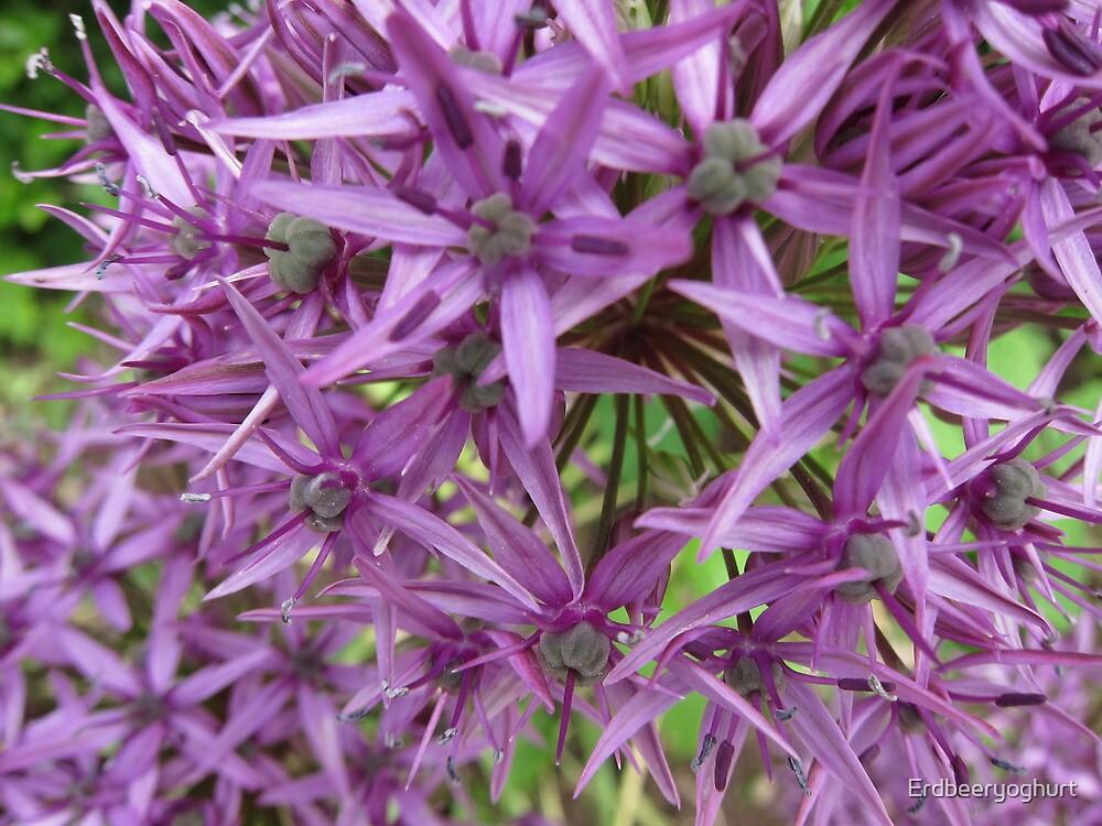 Purple flowers by Erdbeeryoghurt