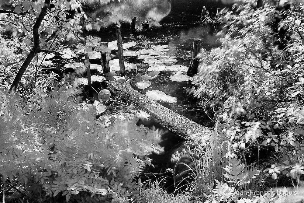 The river by Jean-François Dupuis