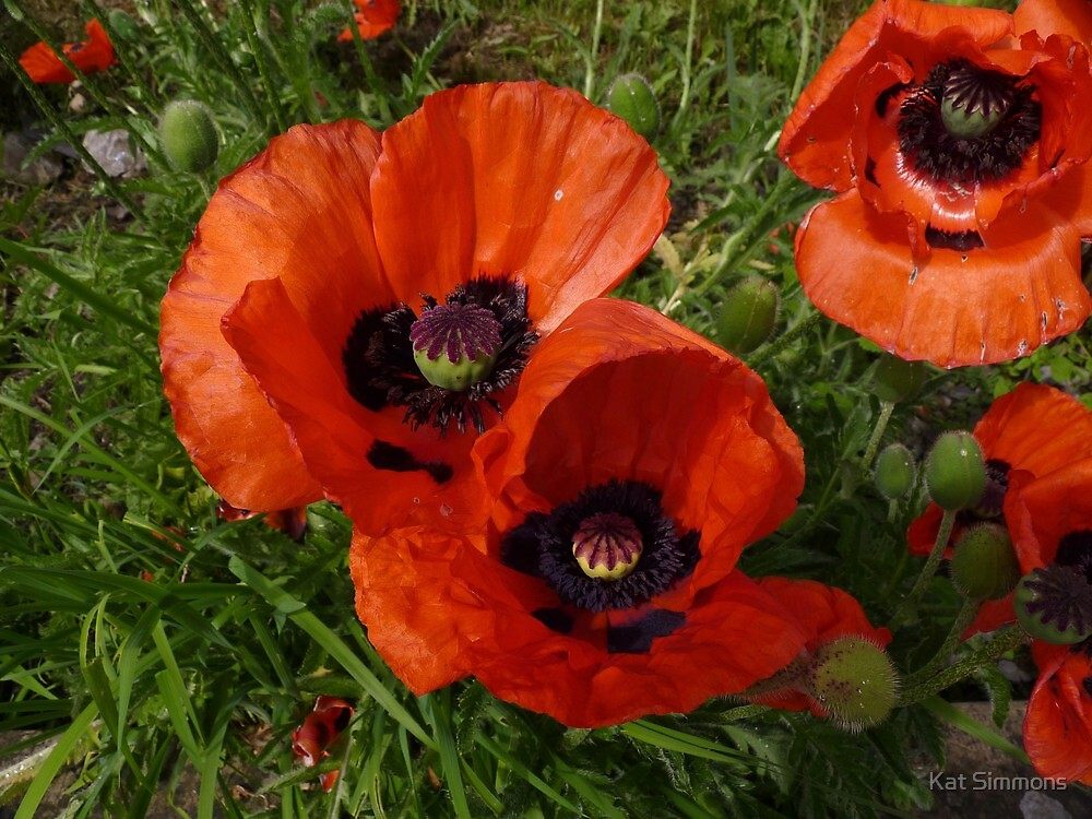 Poppies at the Station by Kat Simmons