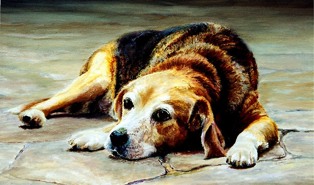 Beagle Dog Portrait by Oldetimemercan