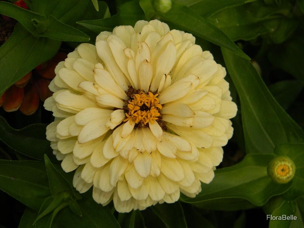 Creamy Belle by FloraBelle