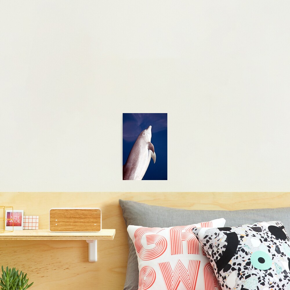 Smiley face Photographic Print