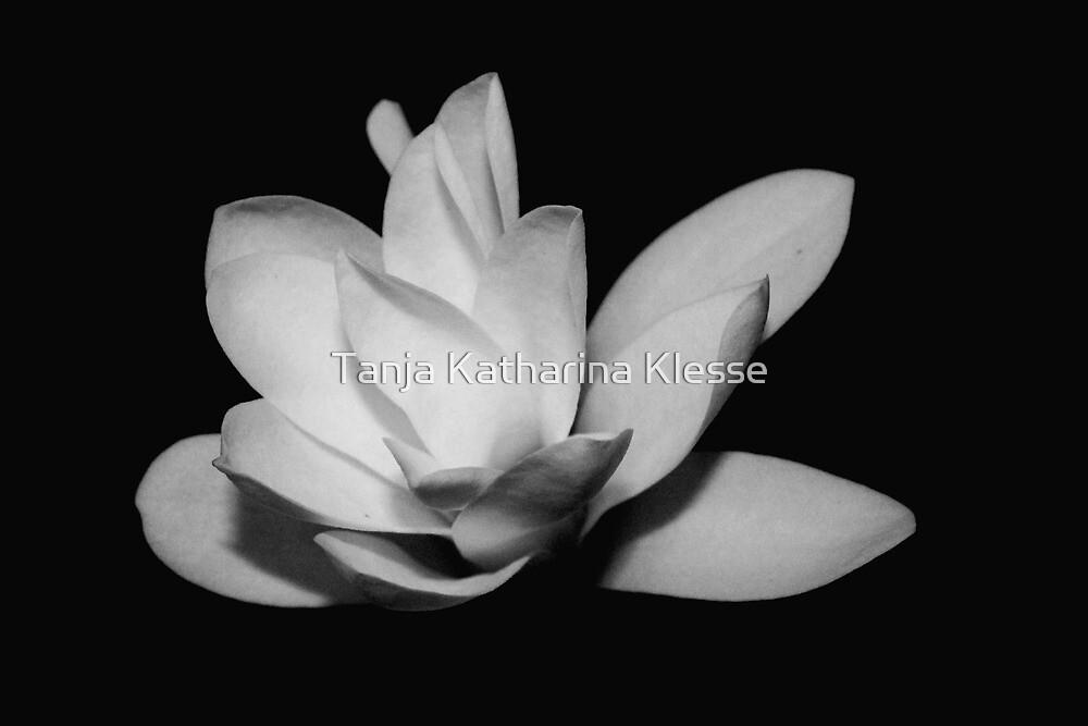 Magnolia VII by Tanja Katharina Klesse