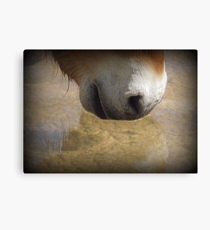Przewalski's Wild Horse ~ Wishing Well Canvas Print