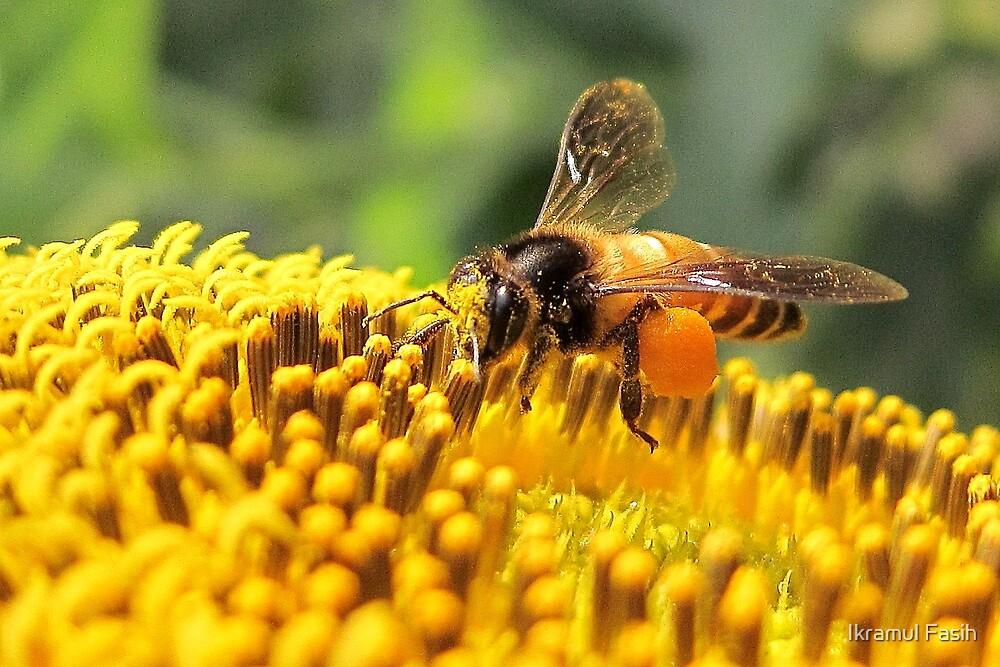 Beauty of the Busy Bee by Ikramul Fasih