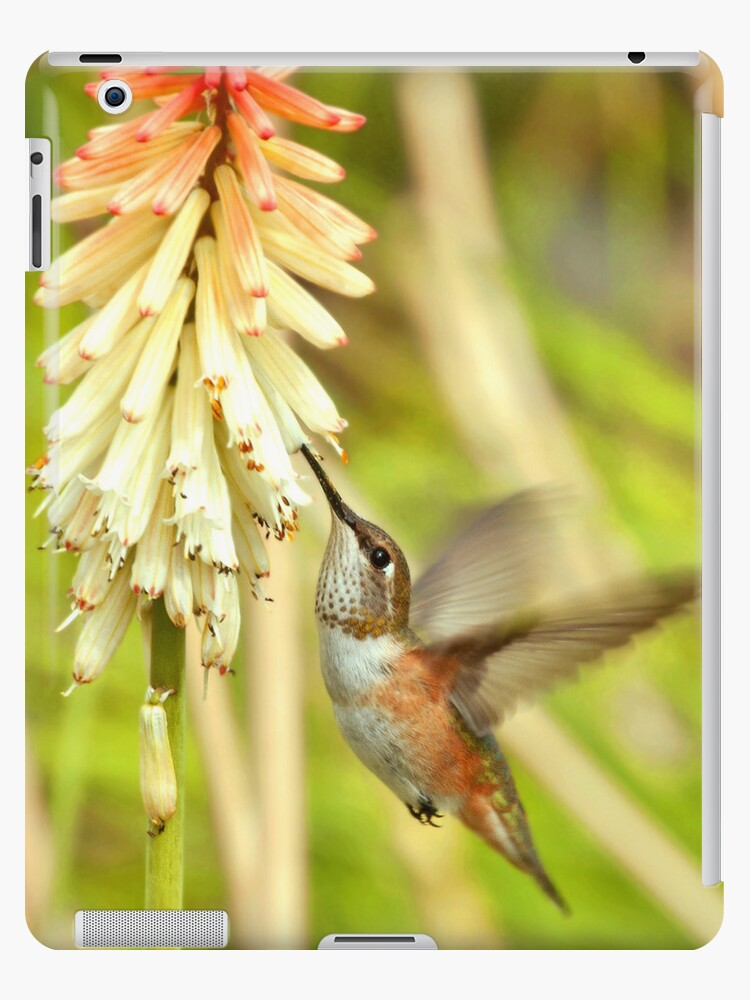 Rufous Hummingbird iPad Case by K D Graves Photography