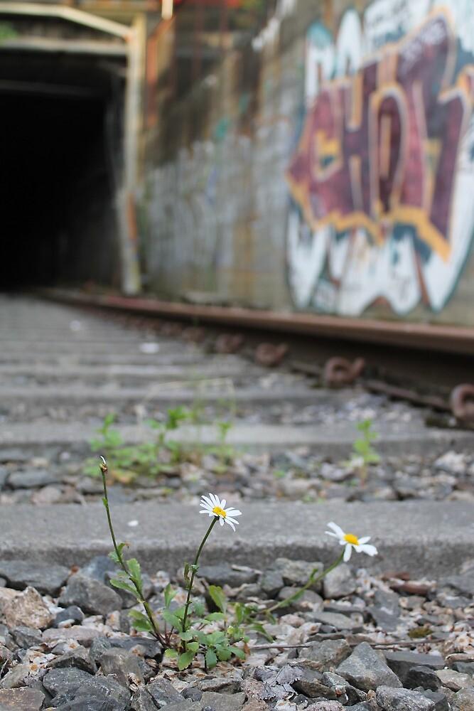 City wilderness by UpNorthPhoto