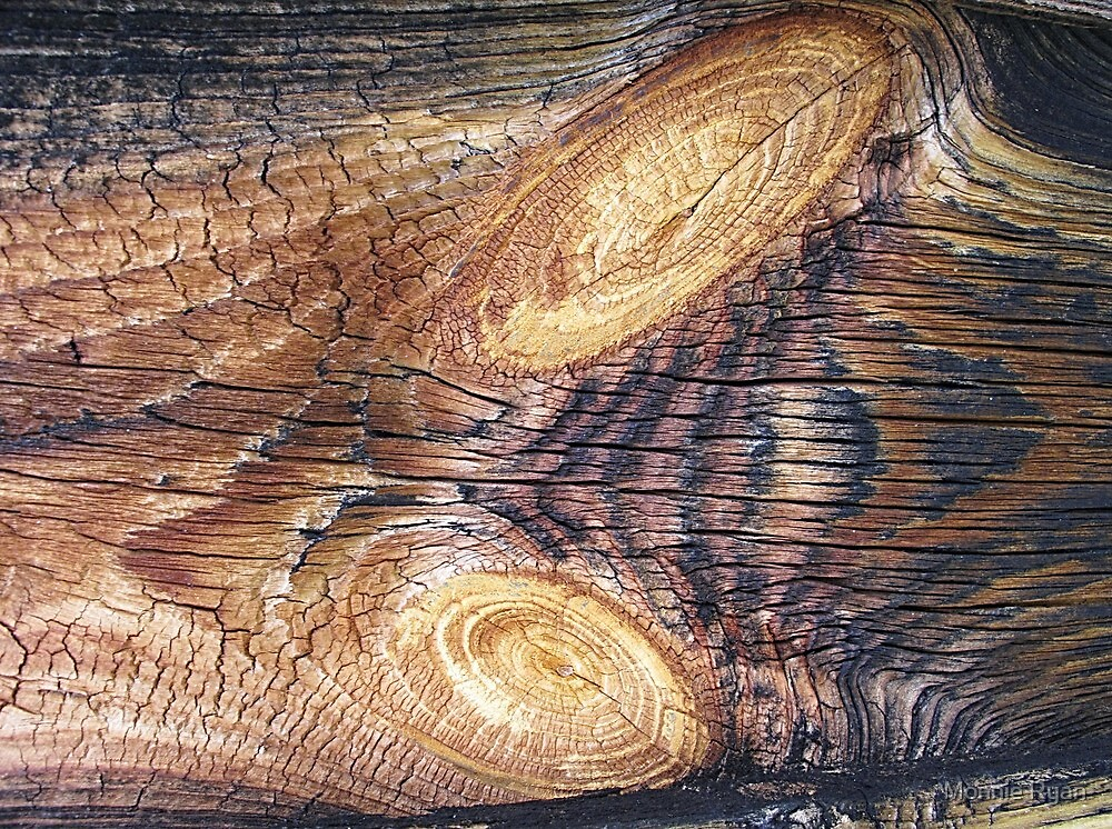 Wood Whorls by Monnie Ryan