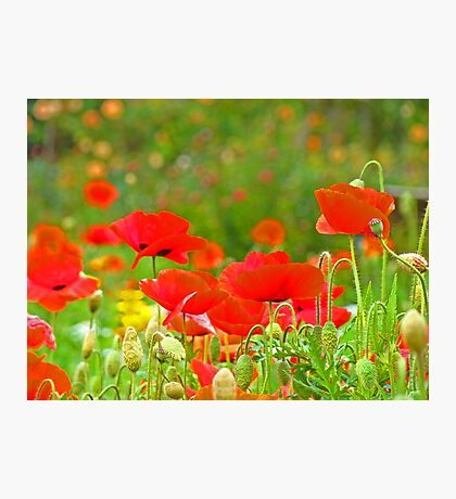Red Poppies Flowers Meadow Art Prints Photographic Print