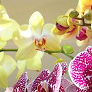 Orchids Floral Art Prints Orchid Flowers by BasleeArtPrints