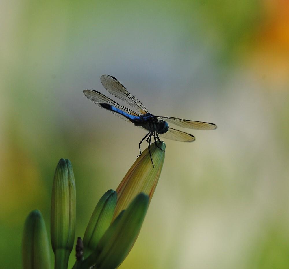 Dragonfly on Flower Buds Near Dusk by Thomas Mckibben