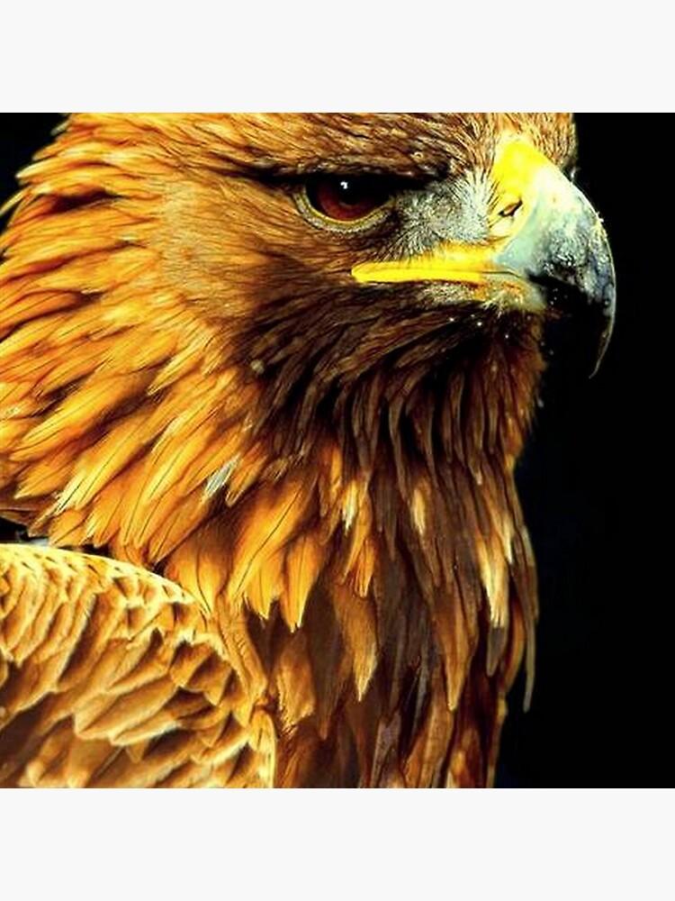 BIRD OF PREY by michaeltodd