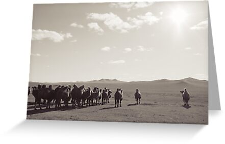 Postcards from Mongolia- Camals by oddoutlet
