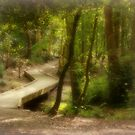 St Leanards Forest by carolhynes