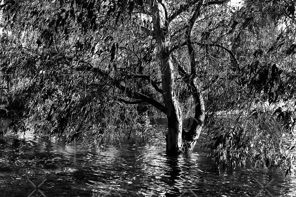 Lake Tree by Heather Friedman