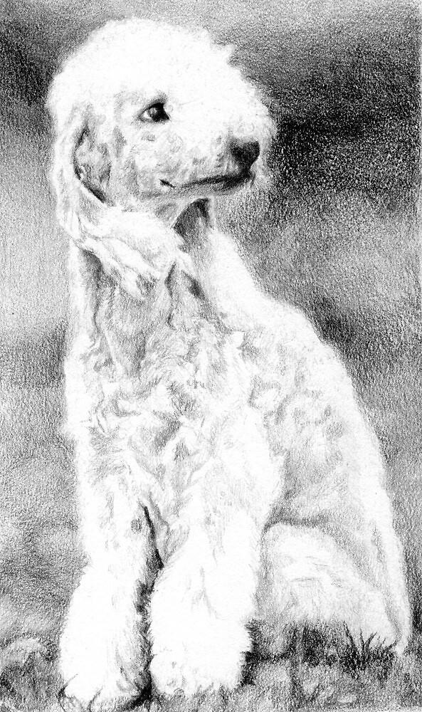 Bedlington Terrier Dog Portrait by Oldetimemercan
