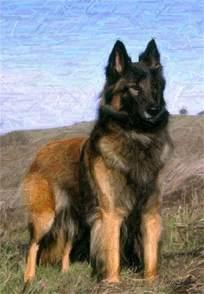 Belgian Tervuren Dog Portrait  by Oldetimemercan