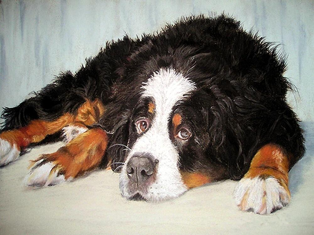 Bernese Mountain Dog Portrait by Oldetimemercan