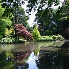 Lake and Trees at Exbury by Mike HobsoN