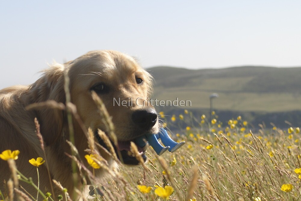 Bailey by Neil Crittenden
