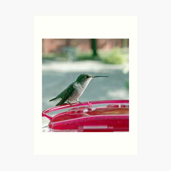 Hummingbird Defender Art Print