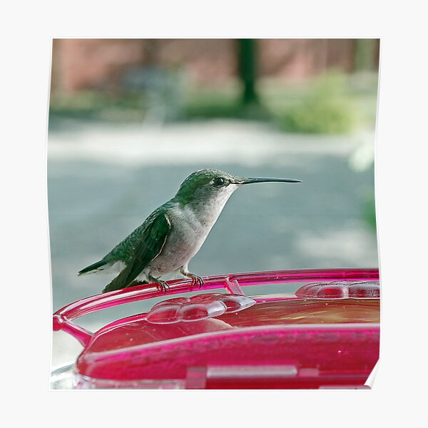 Hummingbird Defender Poster