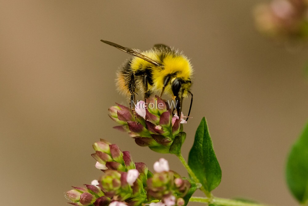 Bees can be so cute! by Nicole W.