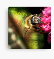 Feather Your Bee Canvas Print