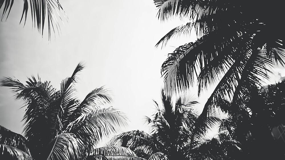 Palm Noir by eurodak