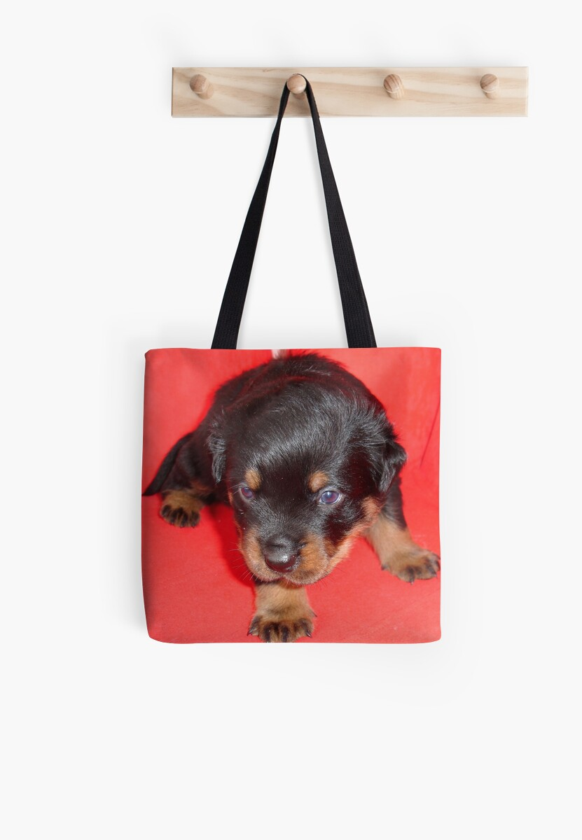 Young Rottweiler Puppy On A Red Background by taiche