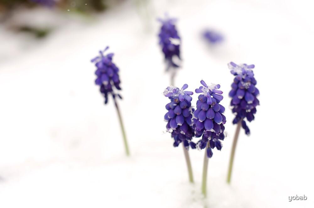 Spring Snow by yobab