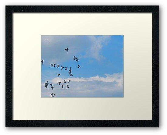 ©HCS The Fly Of Freedom by OmarHernandez