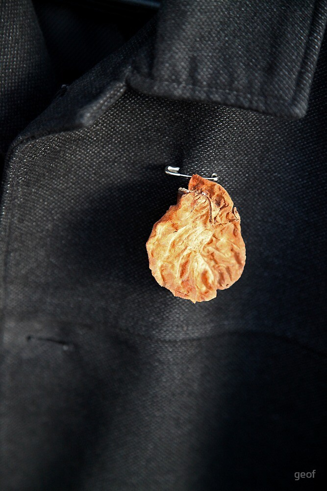 his only medal ; a desiccated leaf. by geof