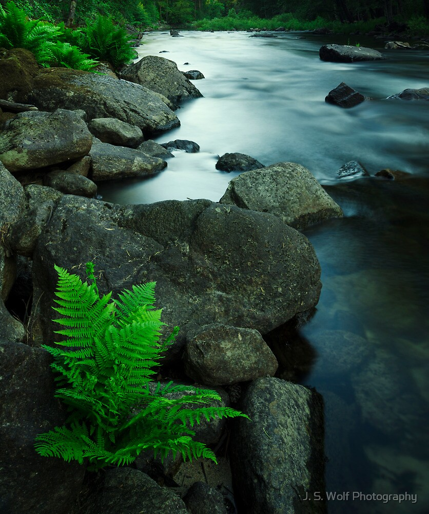 Spring Fern by jswolfphoto