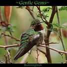 Gentle Gems  by Kimberly Chadwick