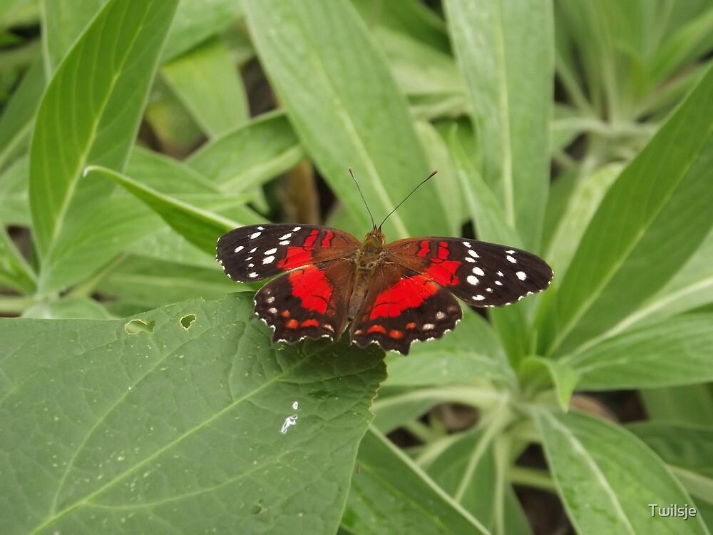 Butterfly. by Twilsje