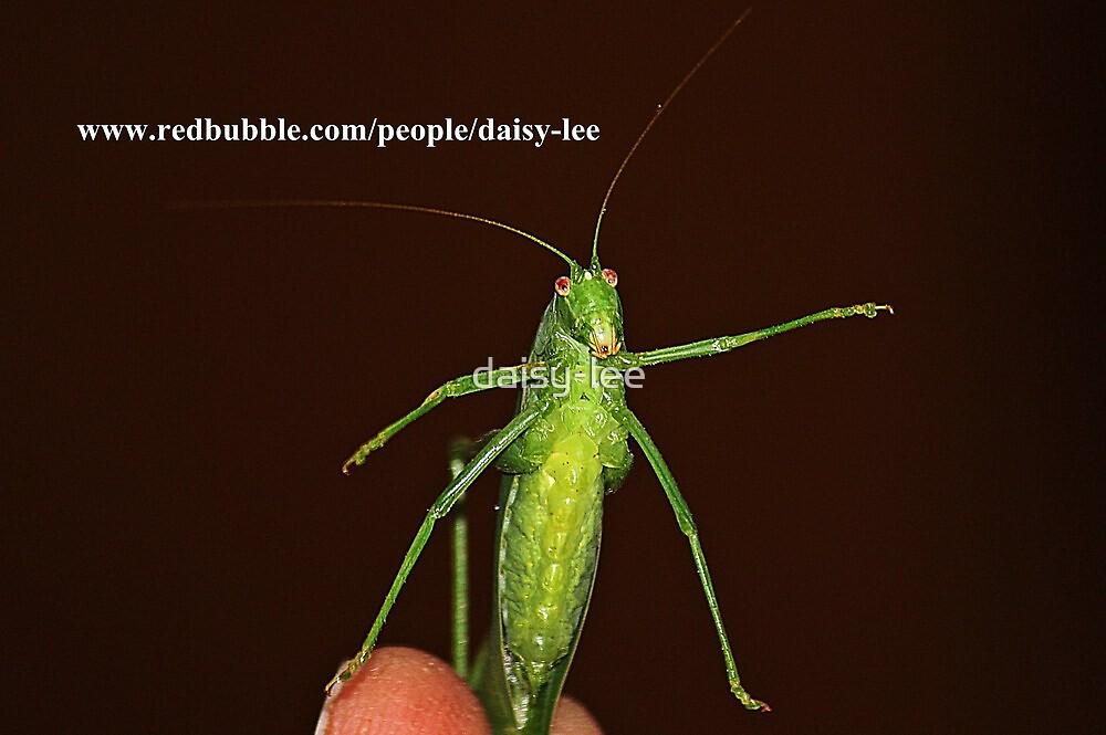 Grasshopper 1 by daisy-lee
