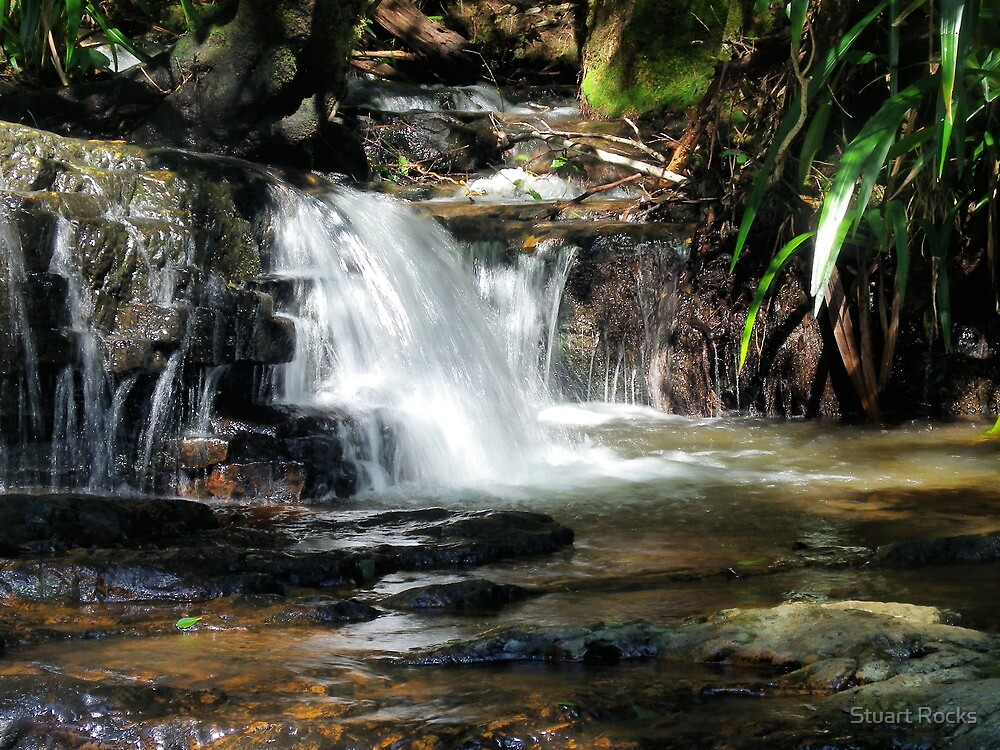 Springbrook 1 by Stuart Rocks