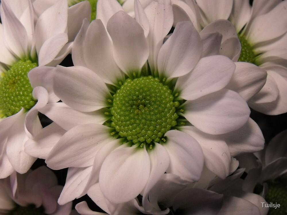 The white flower. by Twilsje