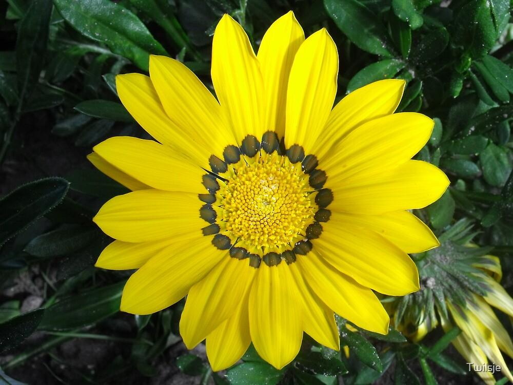 The yellow flower. by Twilsje