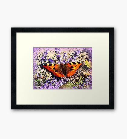 Small Tortoiseshell on Lavender Framed Print